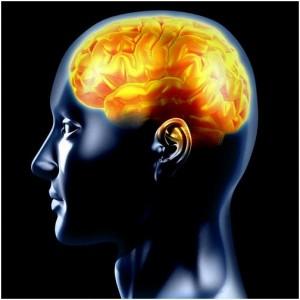 رشته مغز و اعصاب