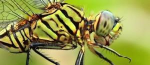 حشرات کلروپلاست ندارند