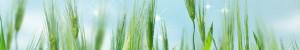 مهندسی کشاورزی